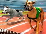 מירוץ כלבים- משחק חדש