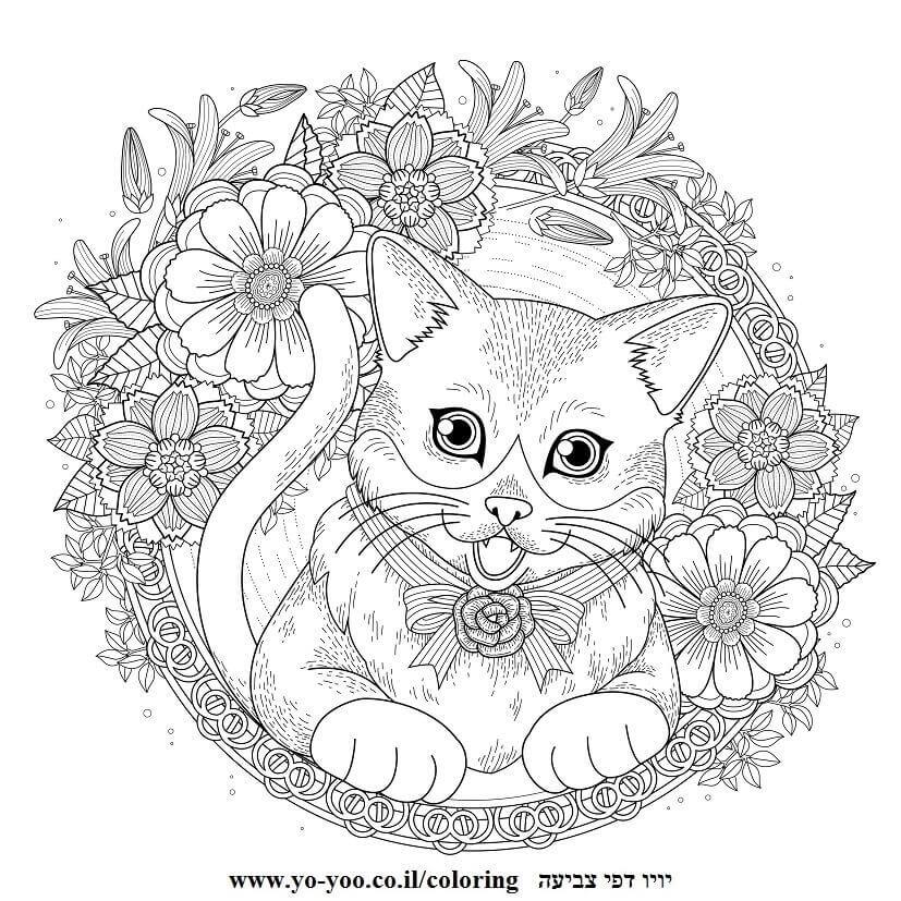 מנדלה חתול חמוד