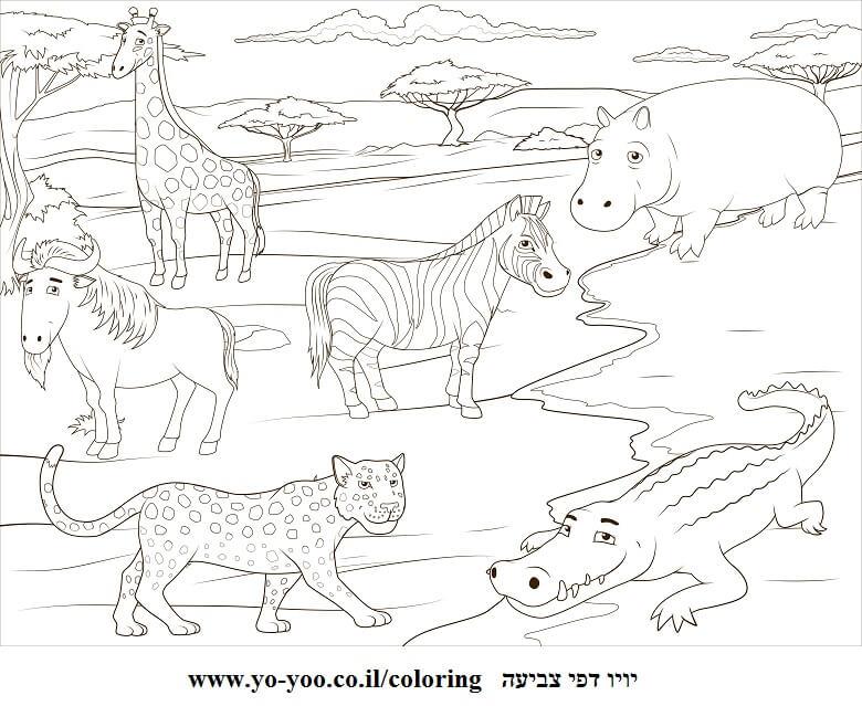 דף צביעה חיות חמודות