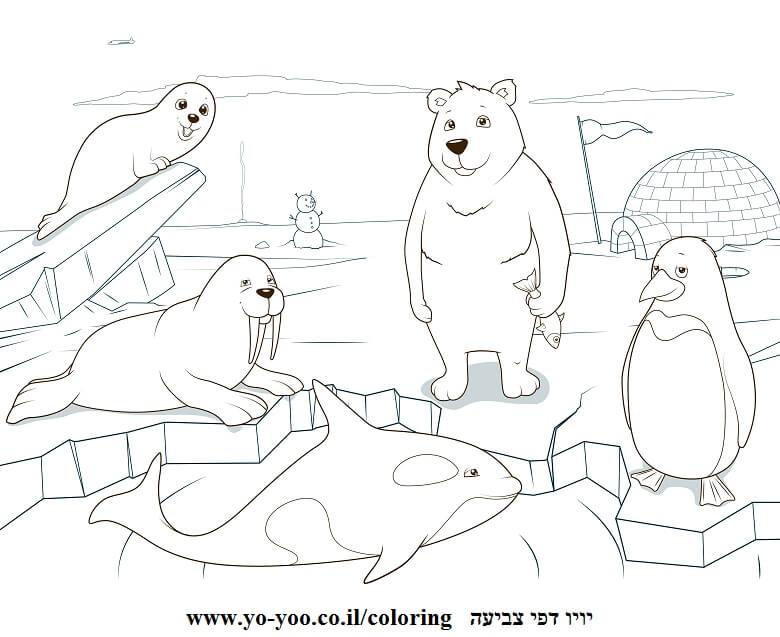 דף צביעה חיות בקוטב