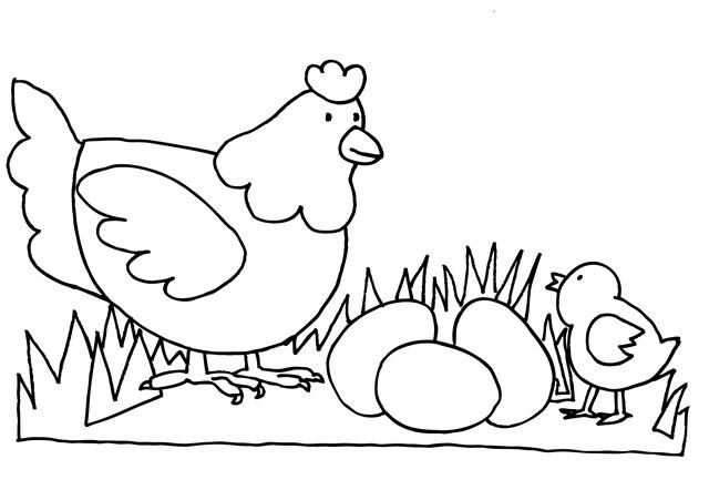 תרנגולת ביצה ואפרוח