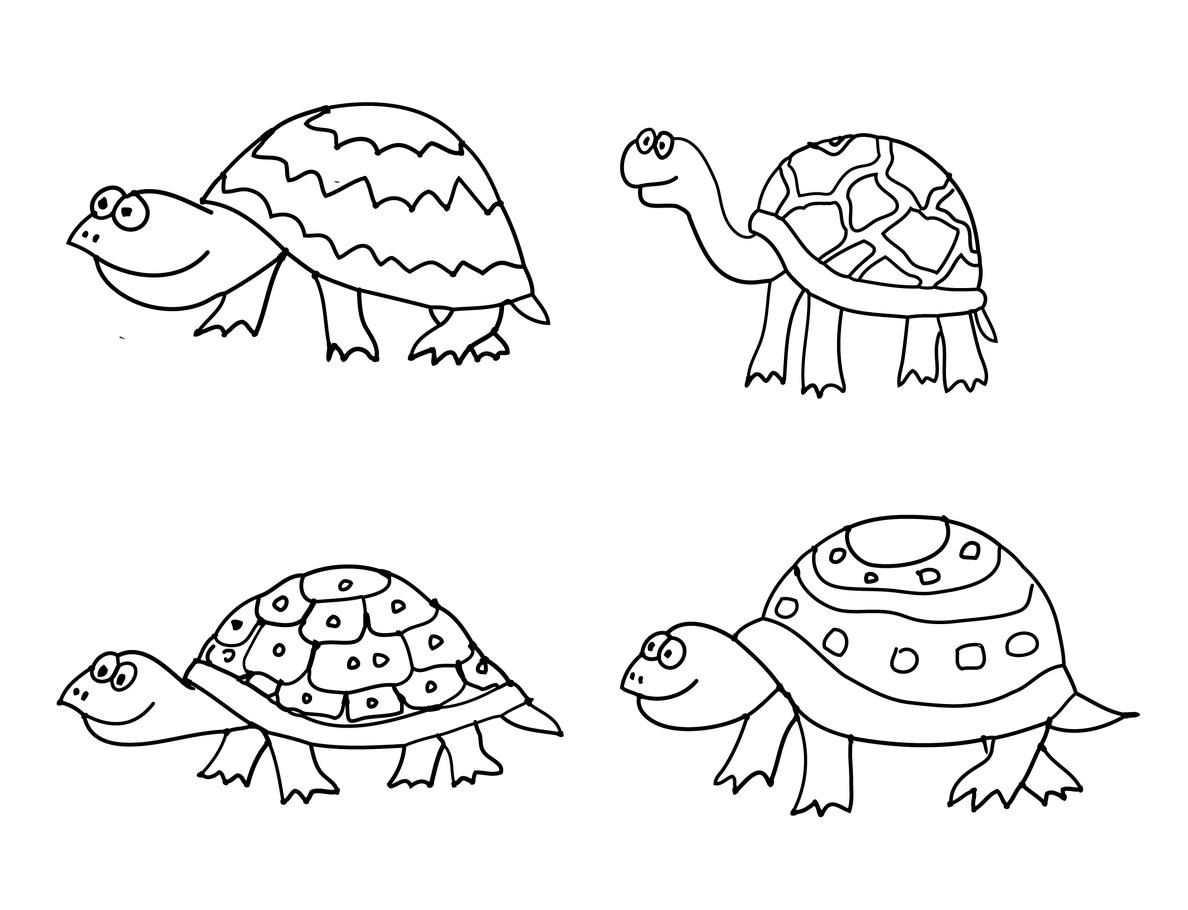 צבים לצביעה