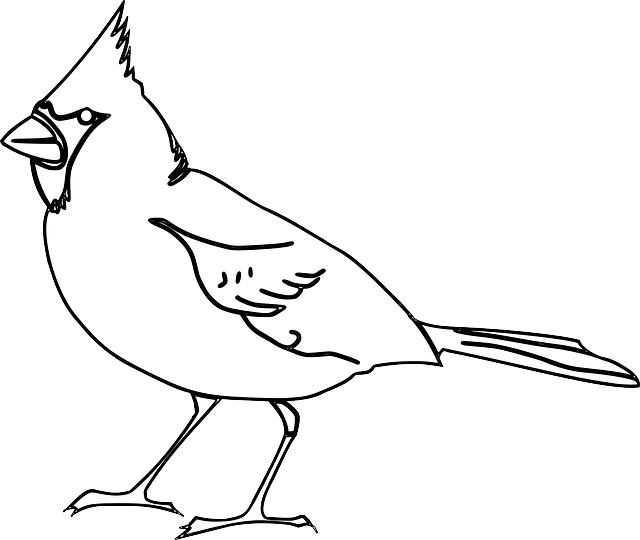 דף צביעה ציפור