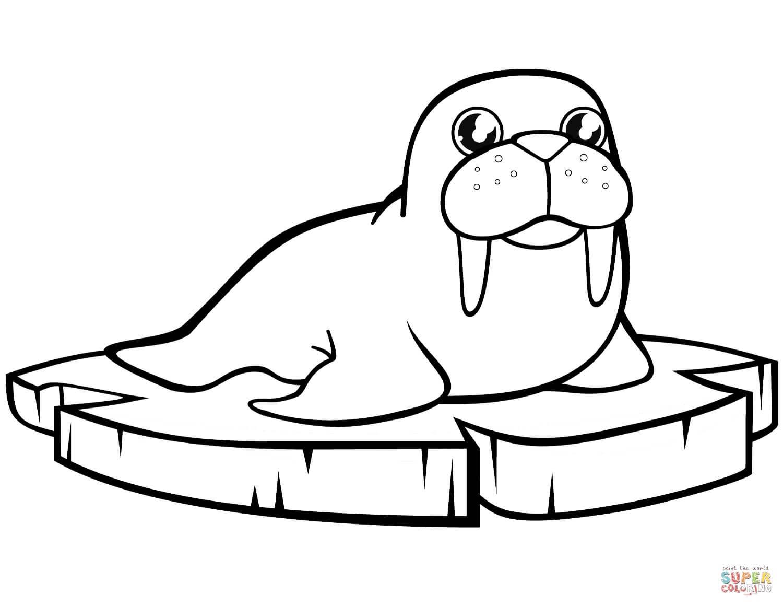 כלב ים על קרח לצביעה