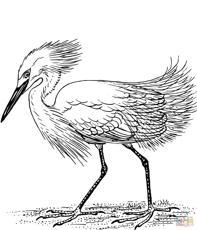 ציפור גדולה לצביעה