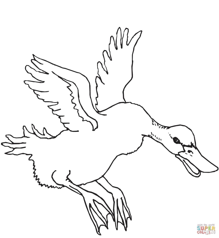 ברווז עף לצביעה