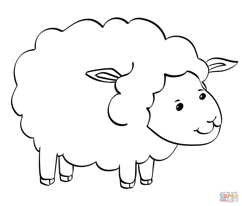 כבשה לצביעה