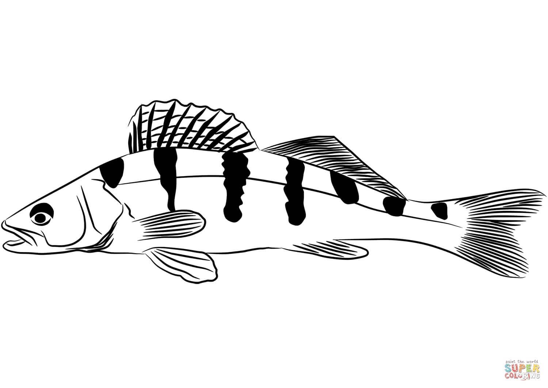 דג לצביעה