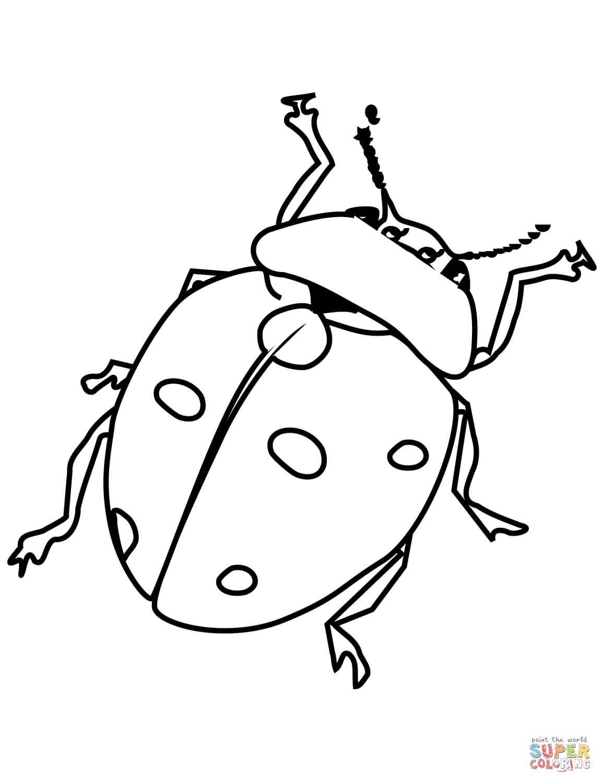 חיפושית לצביעה