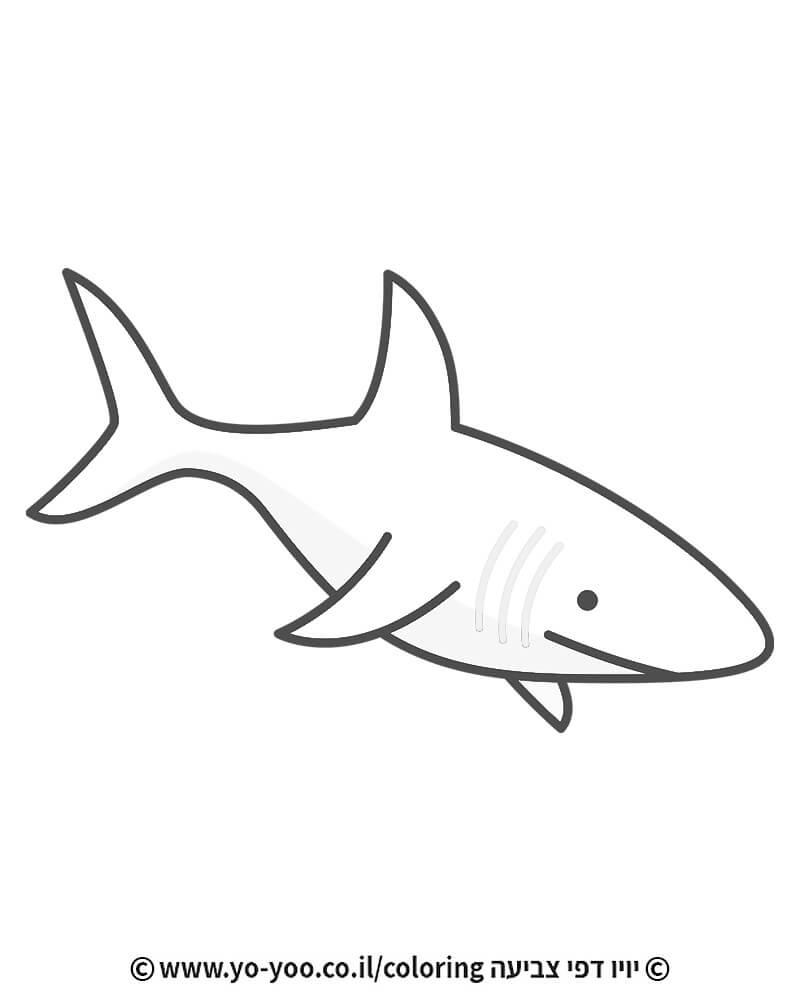 דף צביעה כריש