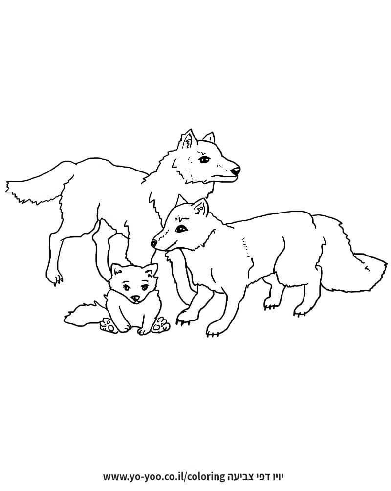 דף צביעה משפחת זאבים