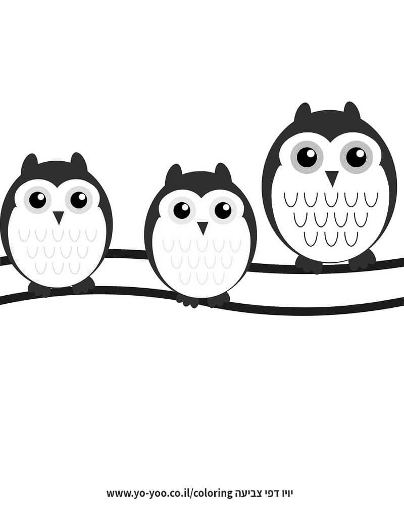 דף צביעה משפחת ינשופים