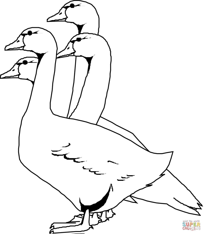 4 אווזים לצביעה
