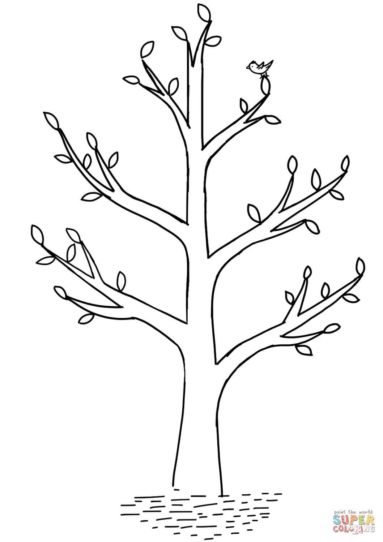 עץ אביב לצביעה