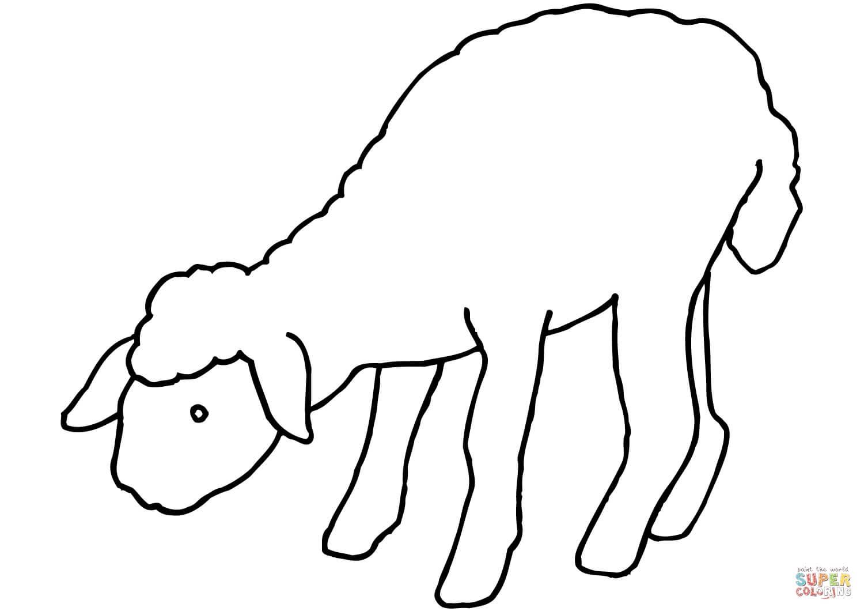 כבש לצביעה