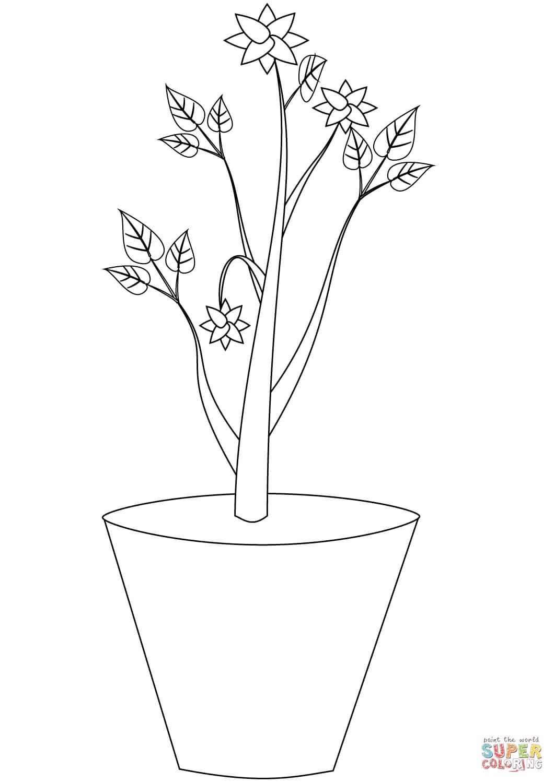 צמח בעציץ לצביעה
