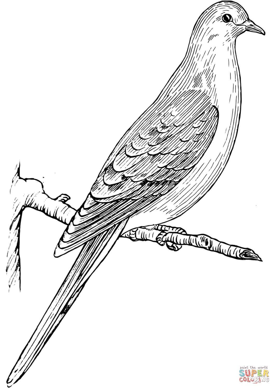 יונה על ענף לצביעה
