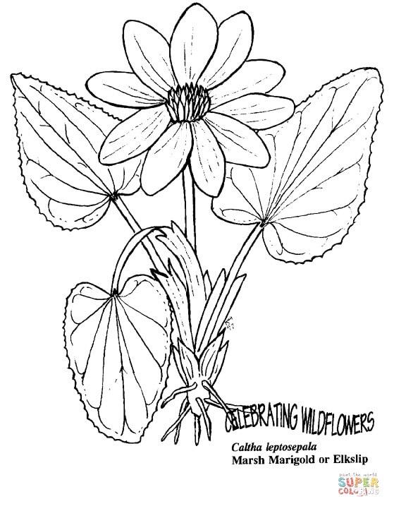 פרח נחמד לצביעה