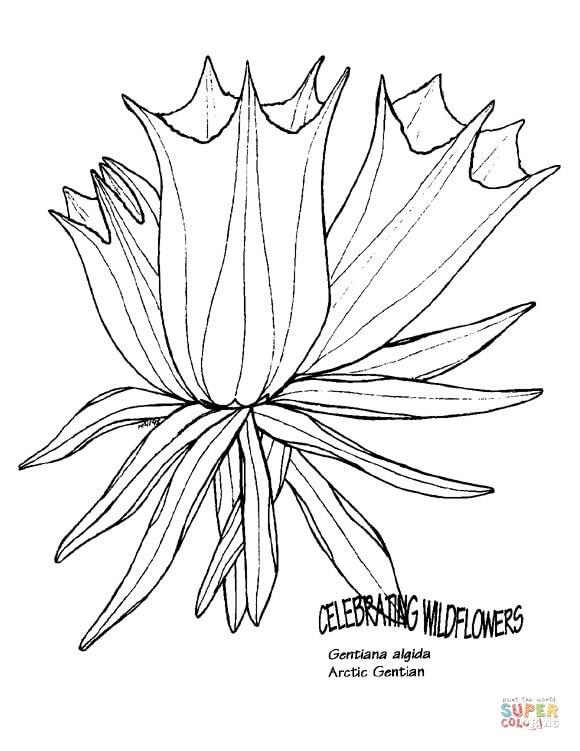 פרח מגניב לצביעה