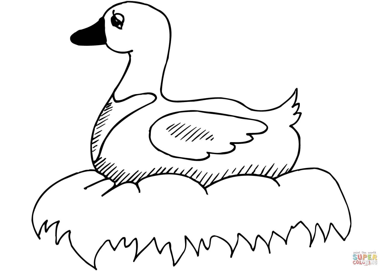 ברווז בקן לצביעה