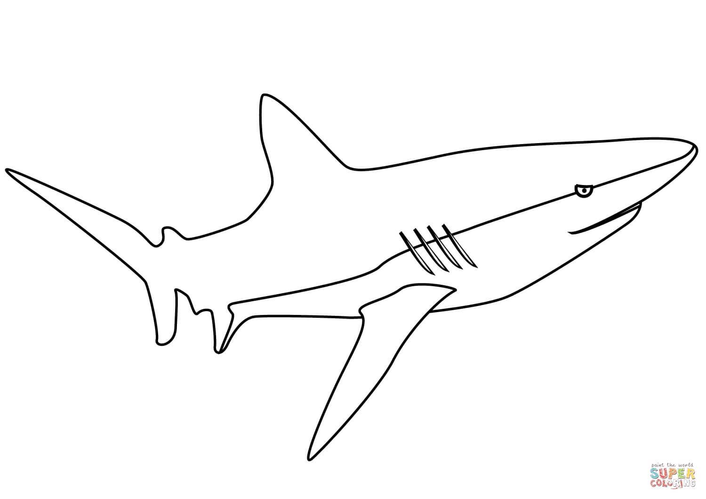 כריש לצביעה