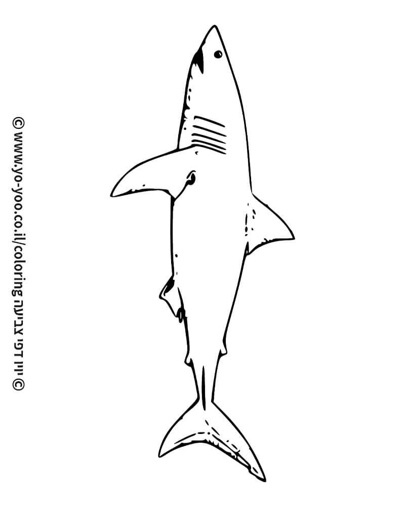 דף צביעה כריש אמיתי