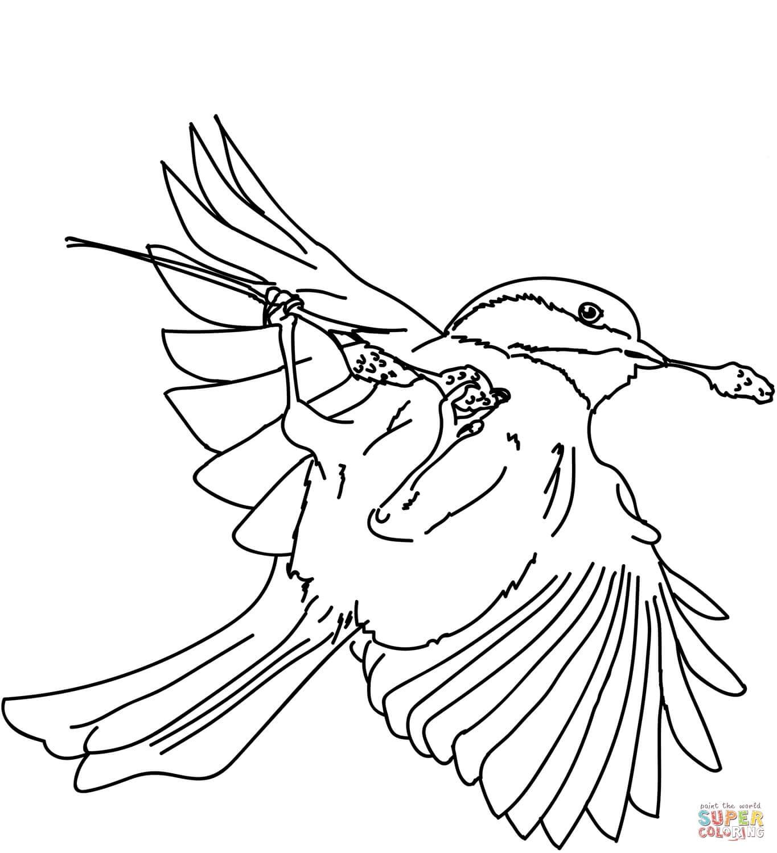 ציפור הפוכה לצביעה