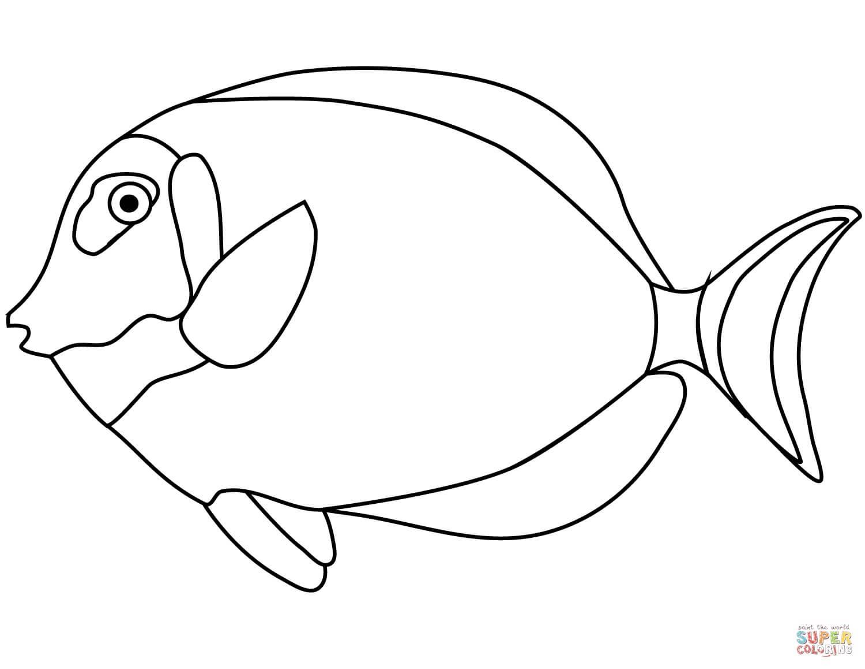 דג טרופי לצביעה