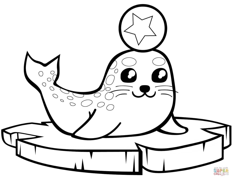 כלב ים לצביעה