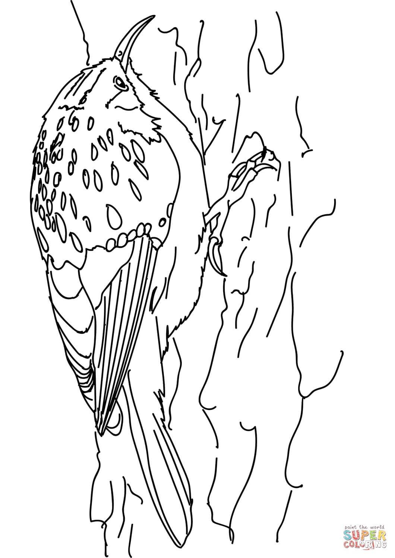 ציפור על עץ לצביעה