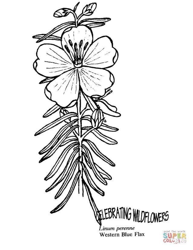 פרח יפה לצביעה
