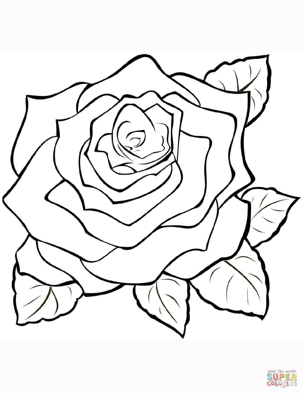 ורד לצביעה
