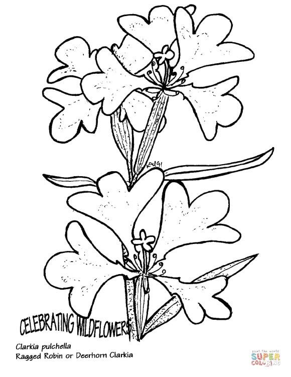 פרח מיוחד לצביעה