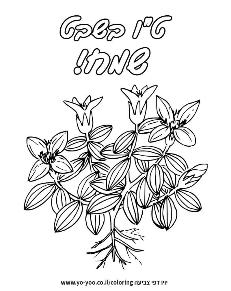 צביעת צמח יפה