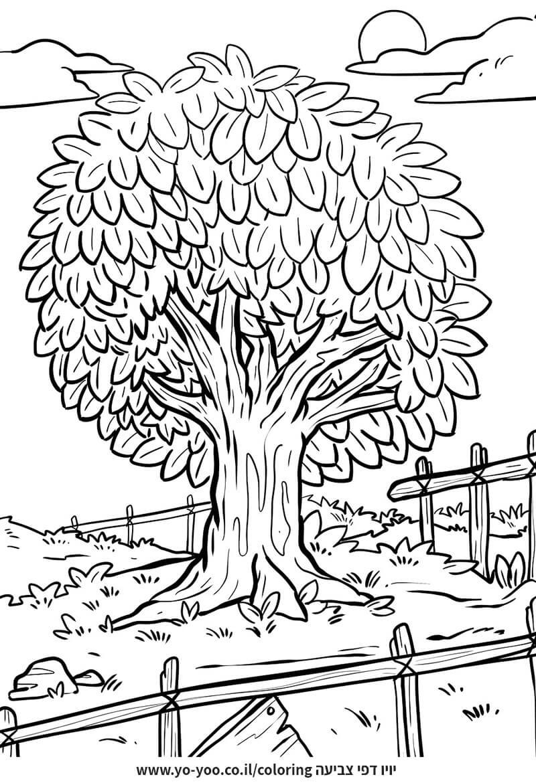דף צביעה עץ
