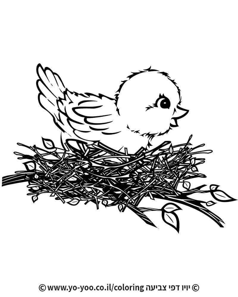 צביעת גוזל בקן