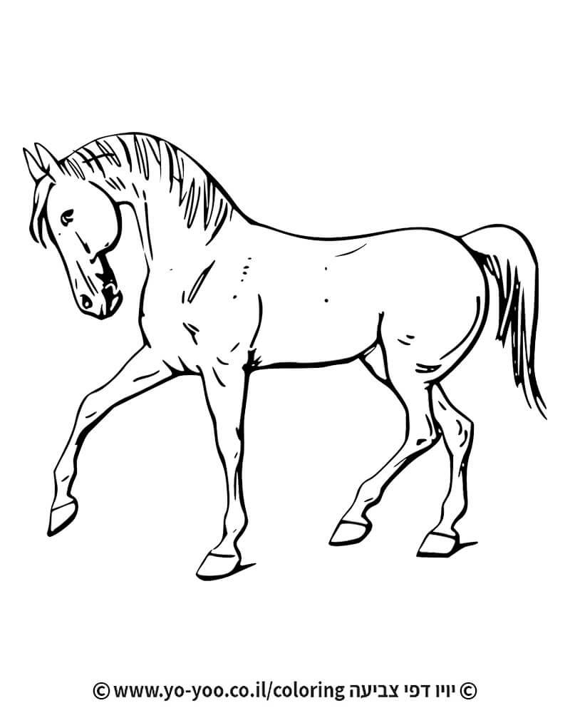 צביעת סוס אצילי