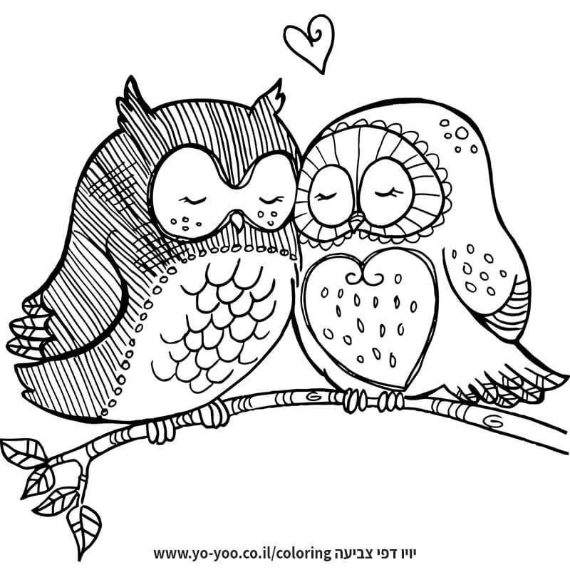 צביעת ינשופים מאוהבים