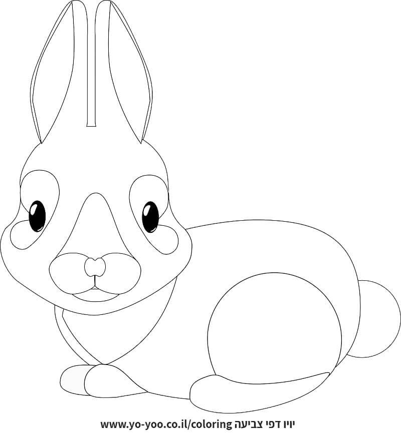 דף צביעה של ארנב