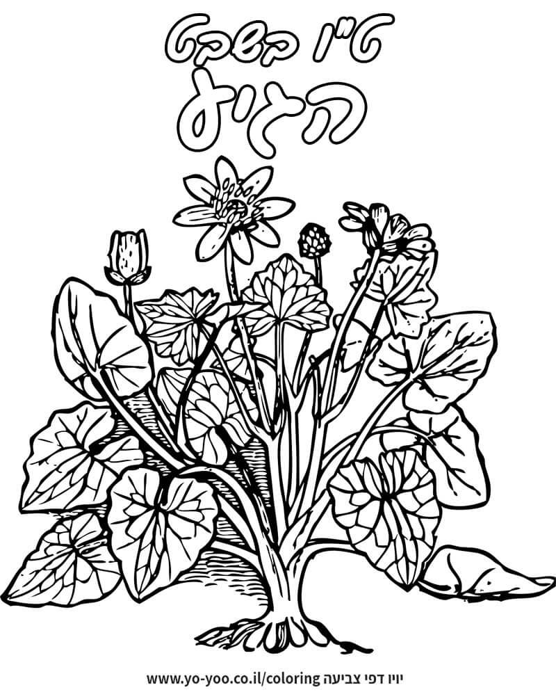 צביעת צמח ופרחים