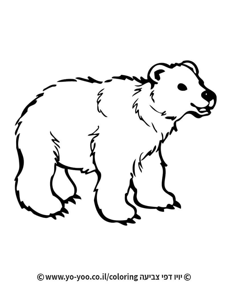 צביעת דוב אמיתי