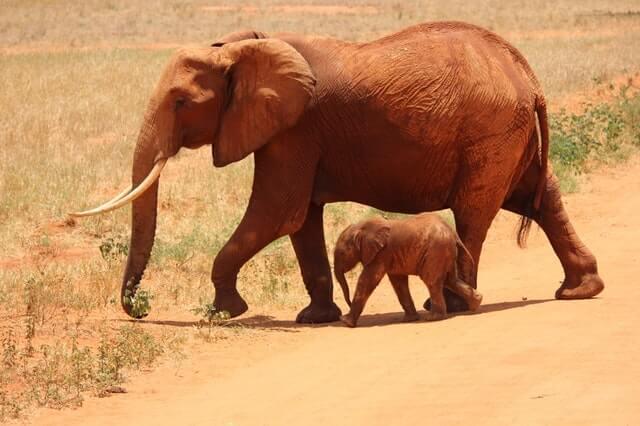 תמונה של פילים