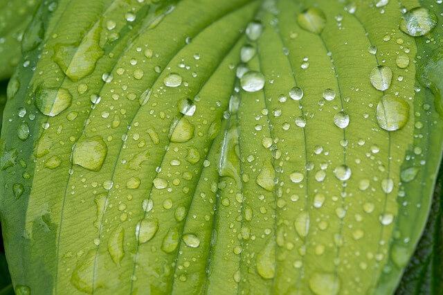 גשם על עלה
