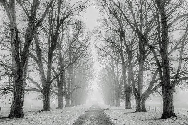 יער בשחור לבן