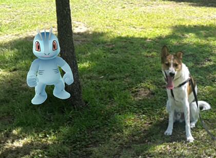פוקימון גו עם כלב
