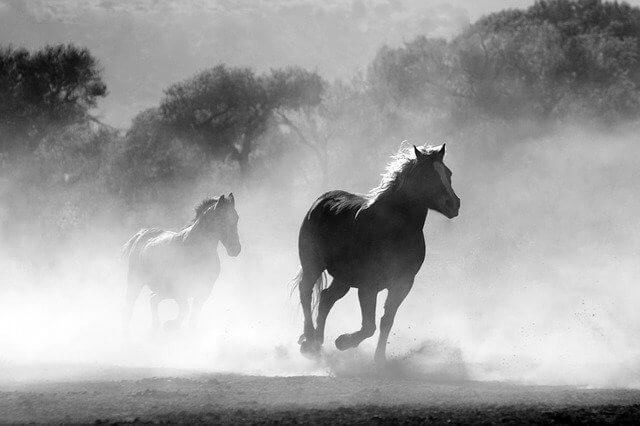 סוסים בשחור לבן