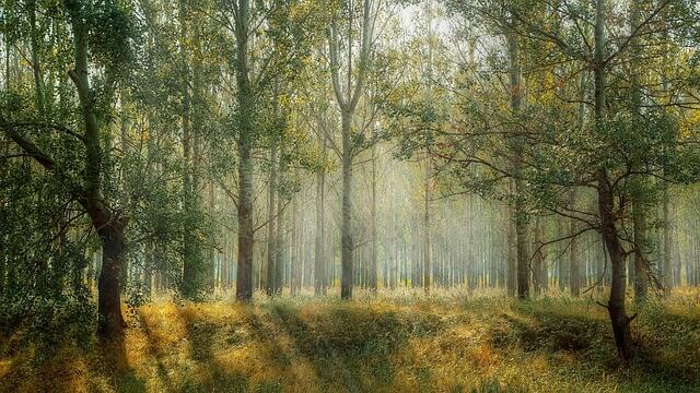 תמונה של יער