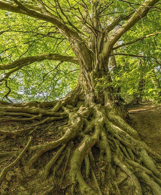 עץ עם שורשים