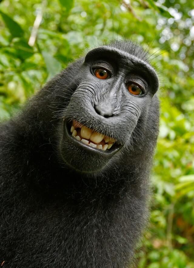 תמונה של קוף