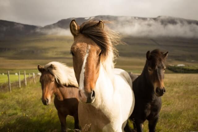 תמונה יפה של סוסים